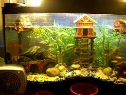 al s 40 gallon turtle tank