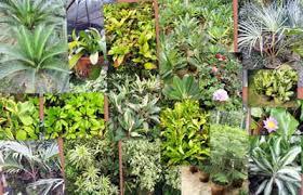 ornamental garden plants ornamental grass plants ornamental plants