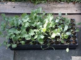 planting a fall garden u2014 veggie gardening tips