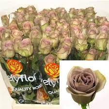 wholesale roses amnesia roses from ecuador wholesale flowers florist supplies uk
