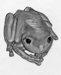 aussie green tree frog drawing by uly55 on deviantart