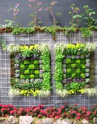 95 best garden wall images on pinterest gardening plants and