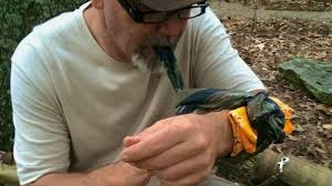 things you need for house 10 things you need for wilderness survival one green planet