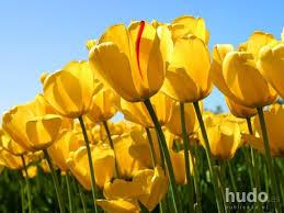 imagenes lindas naturaleza las flores otro carteles hudo es