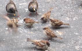 Birds in new york city ephemeral new york