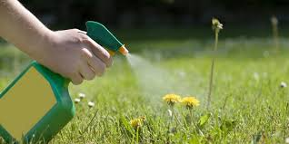 Lawn Care Gadgets by Best Weed Killer For Your Lawn How To Kill Weeds This Spring