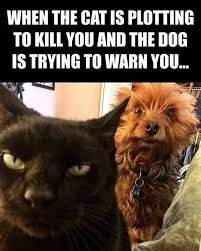 Dog Cat Meme - joel comm on twitter another reason dogs rule dog cat meme