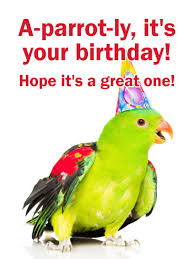 parrot funny birthday card for friends birthday u0026 greeting cards