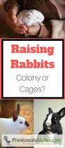 Raising Meat Chickens Your Backyard by Colony Vs Cage Rabbits Rabbit Raising And Backyard