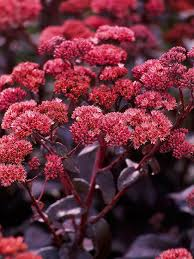 top fall flowers for your garden perennials plants and gardens