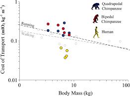 bone broke posts on archaeology osteology u0026 biological