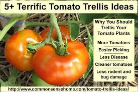 5 terrific tomato trellis ideas homestead bloggers network