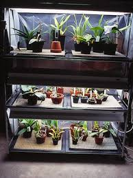 Fluorescent Light For Plants How To Grow Orchids Under Artificial Light Dummies