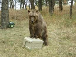 Animal Planet Documentary Grizzly Bears Full Documentaries - animals of montana inc filmmaking