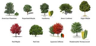 55 trees types of trees patterns gardens plants
