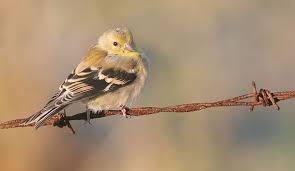 Ontario Backyard Birds Cute Birds Artism And All That