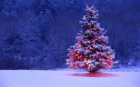 outdoor christmas tree lights trees fires awesome large