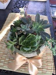 Succulent Planter by Succulent Planter In Agoura Hills Ca Oakbrook Florist U0026 The
