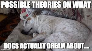 Meme Dream - meme d from the headlines what do dogs dream about the interrobang