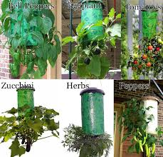28 upside down vegetable garden jason s upside down garden 09