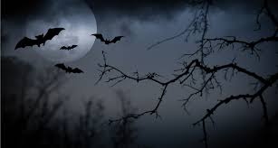a halloween bat with a dark background what is a bat bug terminix