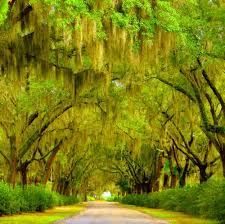 116 best trees images on nature scenery and weeping