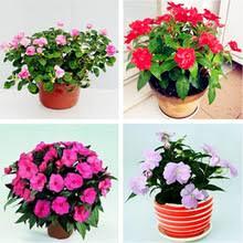 Cheap Flower Seeds - online get cheap flower seeds balsamina aliexpress com alibaba