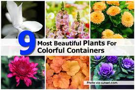 9 most beautiful plants for colorful containers