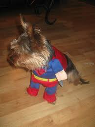 costume tshirts picture more detailed picture about superman dog