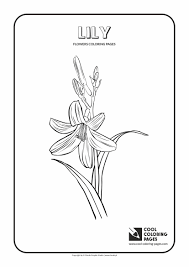 coloring pages of roses and flowers flowers coloring pages cool coloring pages