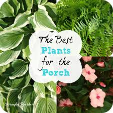 the best plants for the porch simply swider