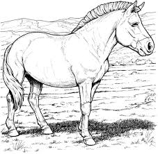 przewalski u0027s wild horse coloring free printable coloring pages