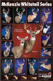 buck and doe mount taxidermy pinterest cow elk white tail