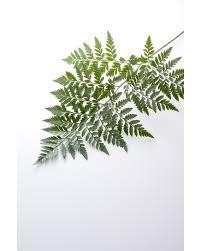 wholesale flowers denver wholesale greenery associated wholesale florist in denver