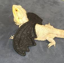 wings bearded dragons multiple colors size fits