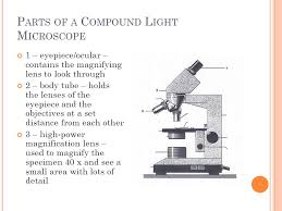 Parts Of A Compound Light Microscope M Icroscopes How To Use A Microscope Microscope Drawings Parts Of