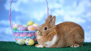 rabbit easter basket bunny easter bunny with basket and carrots stock footage