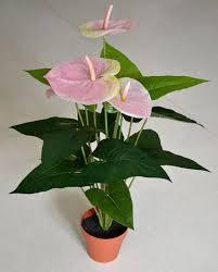 flower shop indoor plants annivia gardens in paphos cyprus