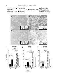 patent us20100330047 mesenchymal stem cells grown under hypoxic