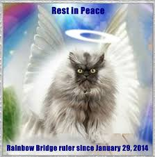 Colonel Meow Memes - colonel meow has died