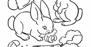 cute animal rabbit coloring books sheet kids drawing art books
