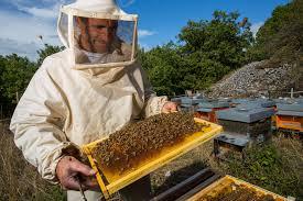 backyard beekeeping u2013 gardenwithliz com