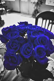 Blue Roses Best 25 Blue Roses Ideas On Pinterest Beautiful Roses Black