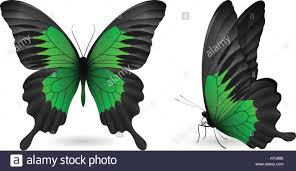 set of colorful butterflies front and side view stock vector