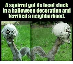 a squirrel got its head stuck in a halloween decoration and