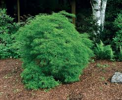 trees for tight spaces gardening
