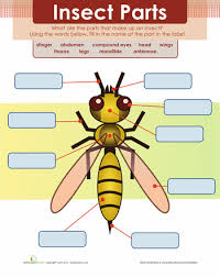 parts of the honey bee bee free free printable and bees