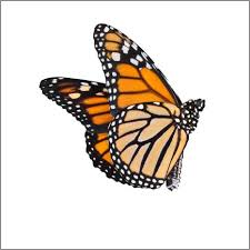 great idea monarch butterfly design 3 vinyl decal by