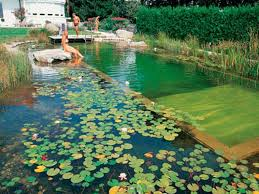 Lagoon Style Pool Designs by Natural Pool Designs Best Home Design Ideas Stylesyllabus Us