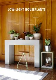 Low Light Indoor Plants by 6 Low Light Houseplants Low Lights Houseplants And Dark Wood